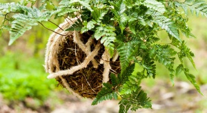 Przyroda to jedna z największych inspiracji projektantów w tym sezonie. Warto je zaczerpnąć z nowej sztuki uprawiania roślin bez doniczki, czyli Kokedamy.