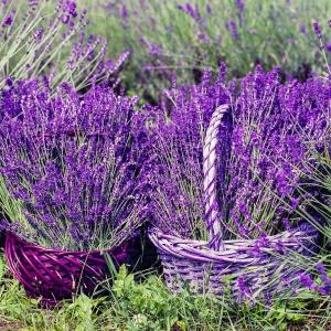 Przede wszystkim postaw na naturę – pachnąca lawenda i świeże zioła stworzą beztroski nastrój francuskiej wsi. Fot. Meble Wójcik