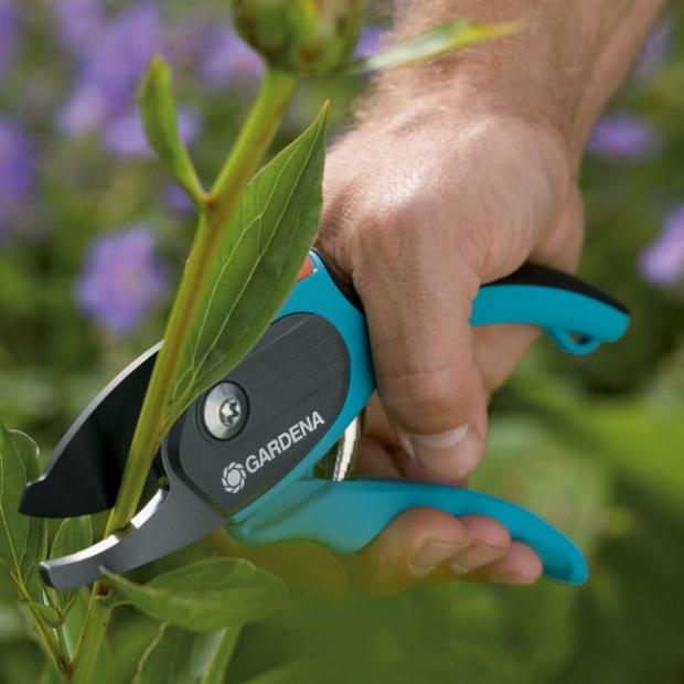 Prace w ogrodzie: wykonaj ostatnie jesienne cięcia