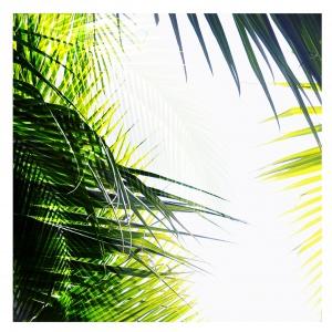 Dekoracja ścienna Jungle z najmodniejszymi printami tego sezonu. 439 i 519 zł. Fot. Westwing