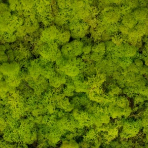 Mech Spring green. Fot. Malita Just Wood