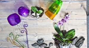 Kwiaty w domu ożywiają wnętrza, wprowadzając do nich wiosenno-letnią atmosferę. Nadają barw naszej codzienności, wpływając pozytywnie na nastrój i umilając każde towarzyskie spotkanie.
