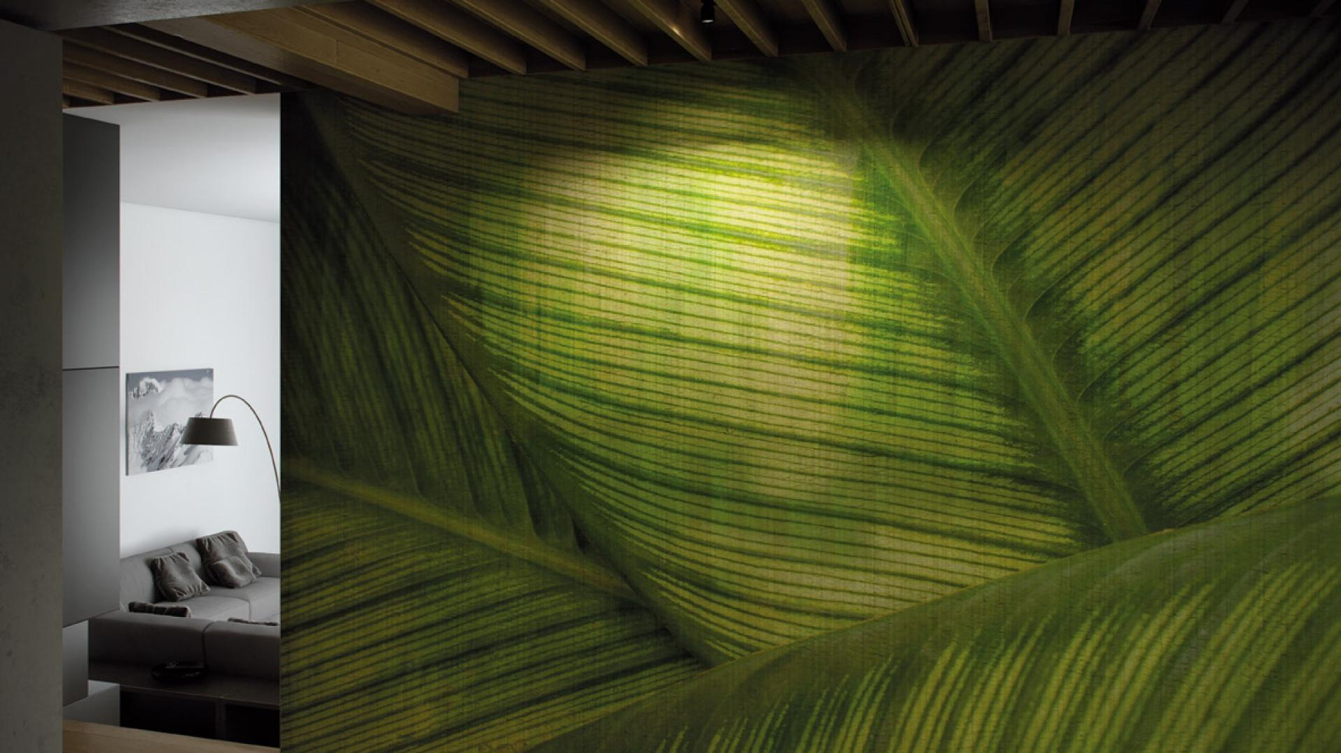 Zoom na palmowy liść — Leaf —skłoni do refleksji nad genialnym porządkiem natury. Fot. Glamora