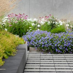 Niektóre z betonowych nawierzchni wpisują się też w trendy ekologiczne, umożliwiając stworzenie nawierzchni z jednej strony zwartej, utwardzonej i wytrzymałej, z drugiej zaś integrującej się z otoczeniem i zapewniającej m.in swobodny odpływ deszczówki do gleby. Na zdjęciu: płyta ecoSolid, ściany - płyta Slim, siedziska – Box Regular oraz donice Regular – wszystko z kolekcji Modern Line