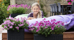 Pelargonia to typowa roślina lata. Praktycznie w całej Europie i w innych częściach świata zdobi balkony, tarasy oraz kwietniki. Jest synonimem trwałości. Warto już dziś pomyśleć o jej zastosowaniu na tarasie, balkonie i w ogrodzie.