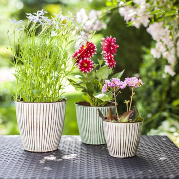 Wiosna w domu i ogrodzie: postaw na rośliny doniczkowe