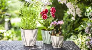 Wiosną planujemy prace w ogrodach i na działkach z uwagą przyglądając się również domowej roślinności. Może warto wzbogacić swoją kolekcję o nowe doniczkowe kwiaty i zioła?