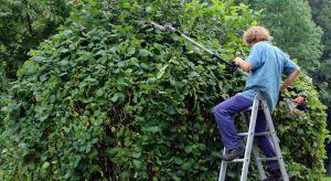 Wiosna to najlepszy czas na gruntowne sprzątanie naszej posesji. Wczesne działania porządkowe przy budynku i w ogrodzie, przełożą się na efekt i spokój przez resztę roku.