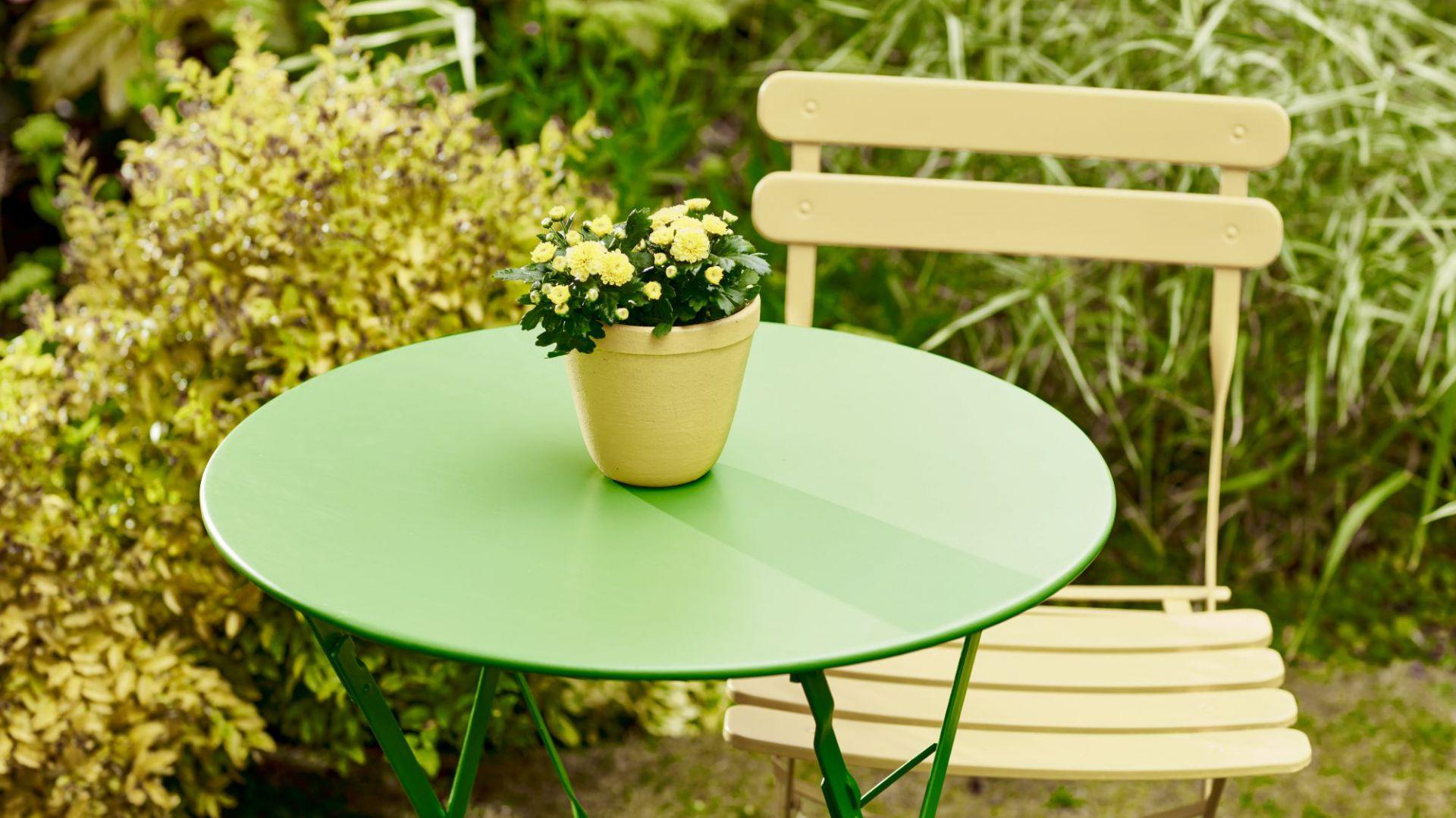 Zielony w ogrodzie. Stolik w odcieniach limonkowy ciemiernik i dojrzała pigwa. Fot. Altax Viva Garden
