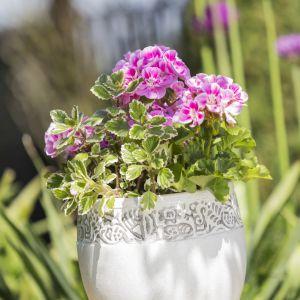 Kwiaty W Ogrodzie Dekoracyjne Osłonki I Doniczki