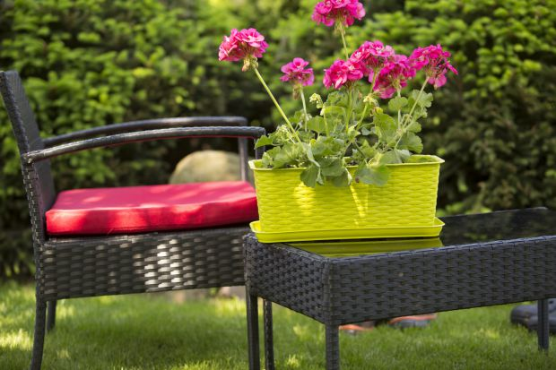 Rośliny są niezbędnym elementem ozdobnym każdego domowego wnętrza, tarasu i balkonu. To one wprowadzają niepowtarzalną, ciepłą atmosferę, ożywiają miejsca w których się znajdują i wspaniale oddziaływają na nastrój mieszkańców.