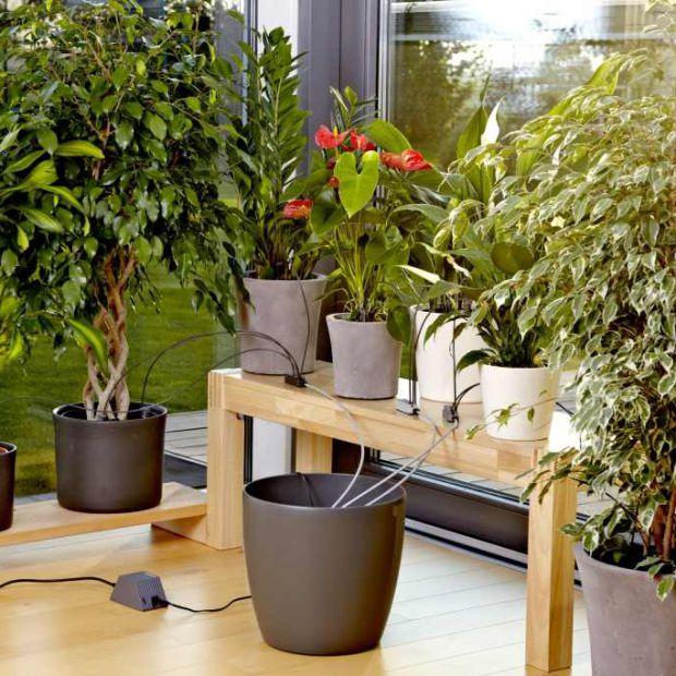 Rośliny w domu. Automatyczna konewka podleje je za ciebie