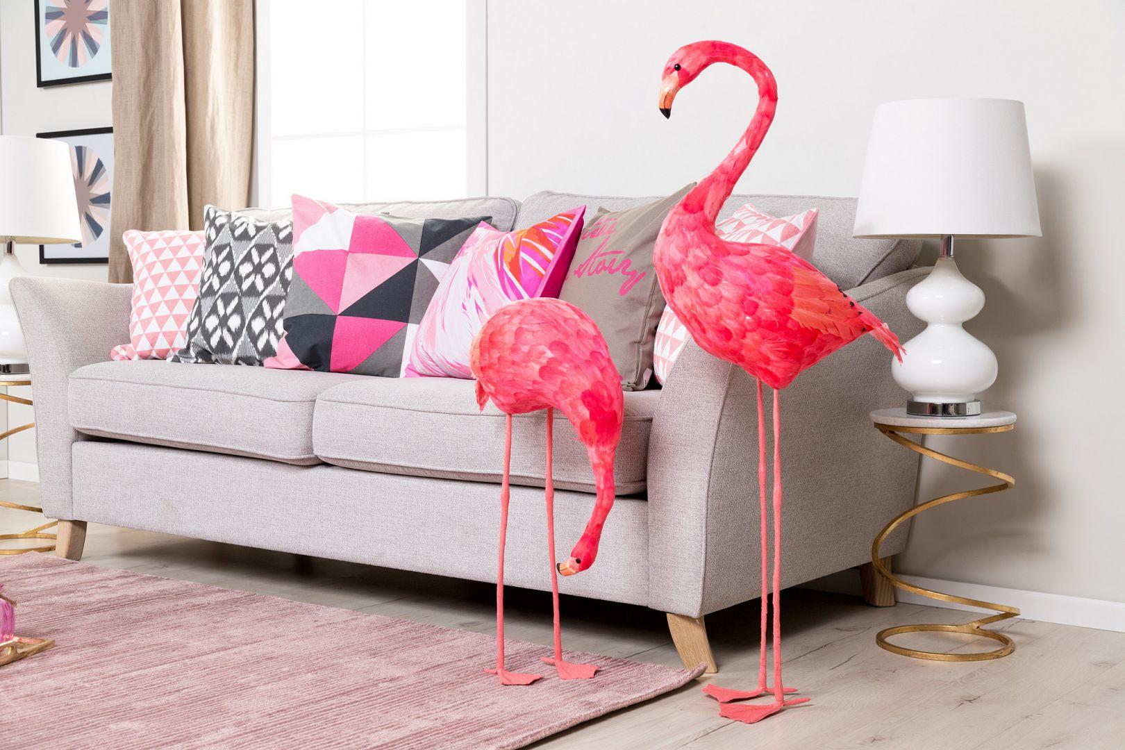 Aruba - wyspa flamingów. Fot. Westwing