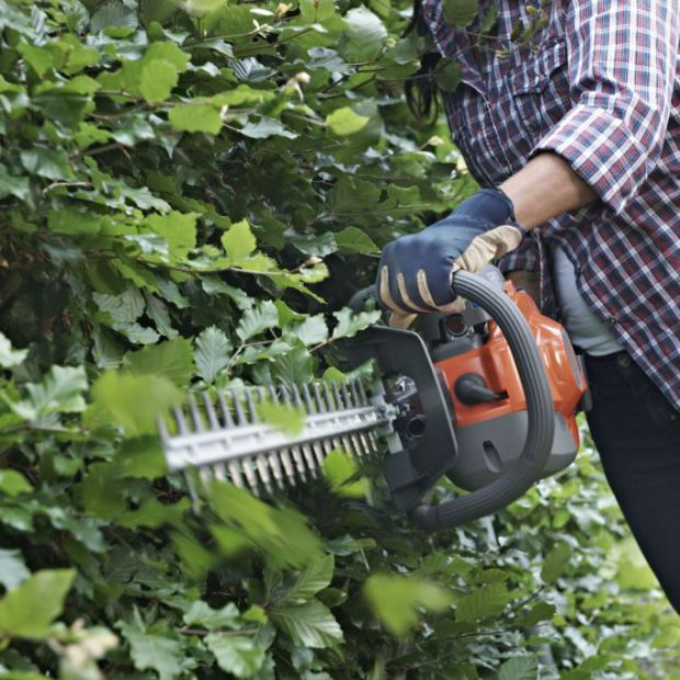 Prace w ogrodzie - przycinamy żywopłot