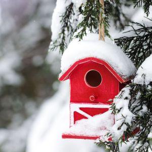 Karmnik dla ptaków w odważnym żywym kolorze ożywi zimowy ogród. Fot. Altax Viva Garden