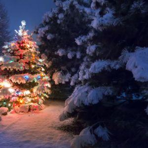 Świąteczne  oświetlenie w ogrodzie. Fot. Activejet