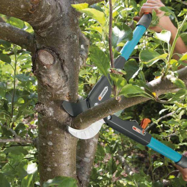 Prace w ogrodzie: zimowe przycinanie gałęzi
