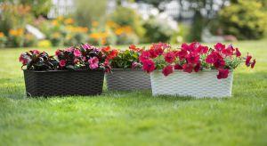 Do akcesoriów, których nie może zabraknąć w ogrodzie i na balkonie należą różnej wielkości doniczki i osłonki. Dzięki estetycznej linii wzorniczej podkreślają wyjątkowy wygląd znajdujących się w nich roślin wspaniale ozdabiając przestr