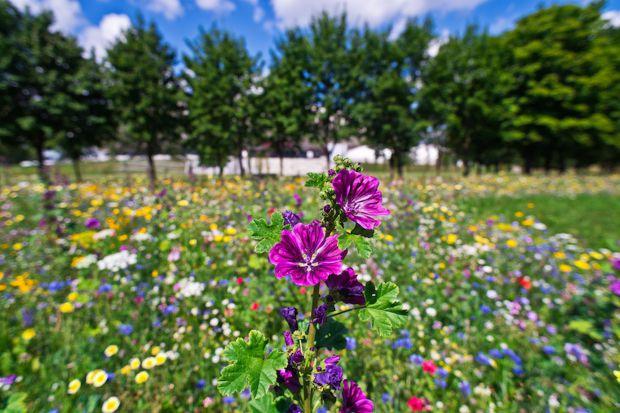 Łąki kwietne - trend w zieleni ogrodowej i miejskiej
