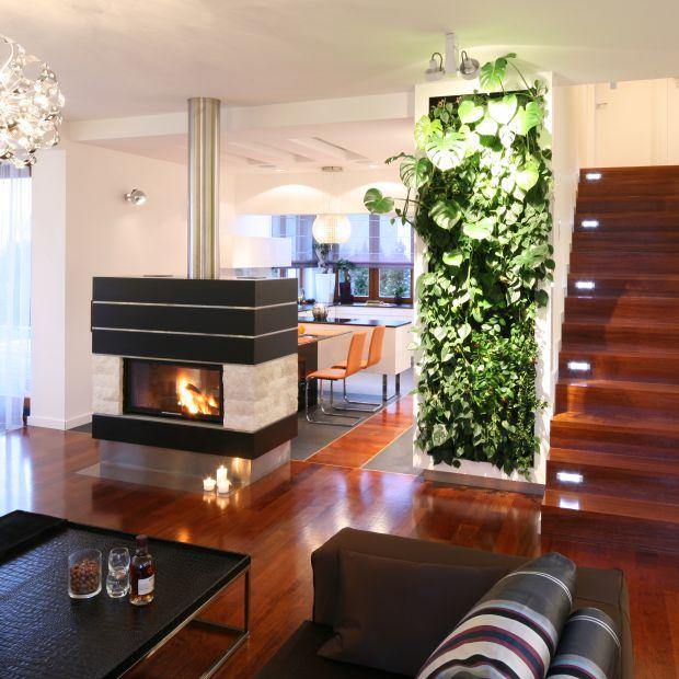Zieleń w domu - poznaj ukryte moce roślin