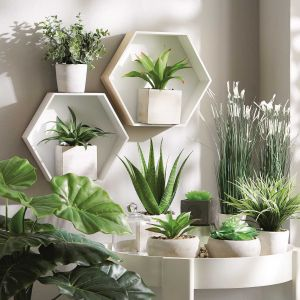 Żywe rośliny we wnętrzu. Fot. KiK