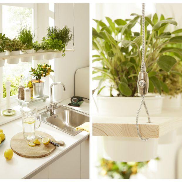 Świeże zioła - wiosenna dekoracja w Twojej kuchni