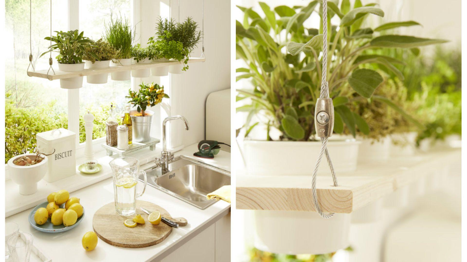 świeże Zioła Wiosenna Dekoracja W Twojej Kuchni