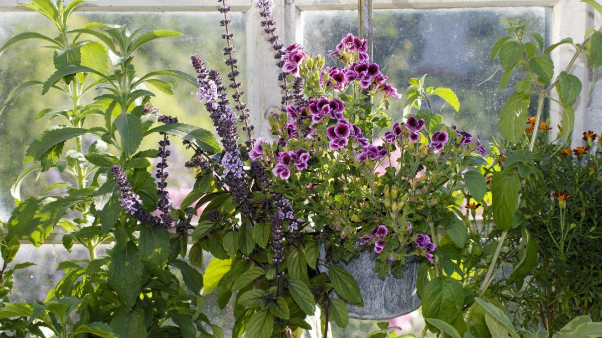 Wiosenny ogród na balkonie - renowacja mebli. Fot. Vidaron