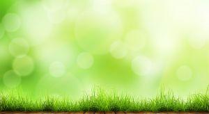 5 czerwca obchodzimy Światowy Dzień Ochrony Środowiska. Jednym z palących problemów w Polsce jest jakość powietrza i występujący w sezonie jesienno-zimowym smog.