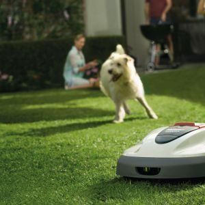 Piękny ogród - mulczowanie trawy: robot koszący Honda Miimo. Fot. Honda