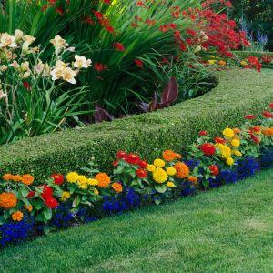 Piękny ogród - przycinanie żywopłotu. Fot. Materiały prasowe Krysiak