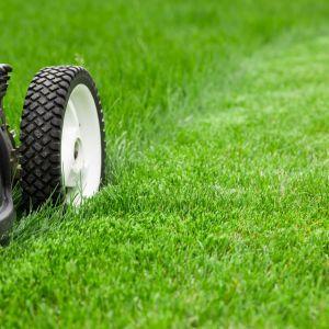Jeśli zależy nam na pięknym trawniku, musimy go kosić co najmniej raz w tygodniu. Fot. Krysiak