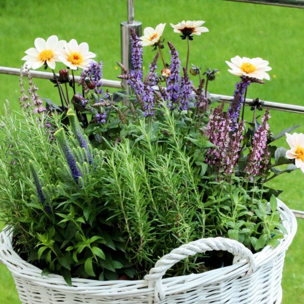5 powodów, dla których warto uprawiać kwiaty