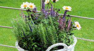 O tym, że rośliny w naszym otoczeniu wpływają na nasze samopoczucie, chyba nikogo nie trzeba przekonywać. Dlaczego jeszcze warto je uprawiać?