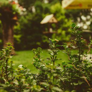 Urządzamy klimatyczny ogród przy domu. Fot. Jawar