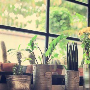 Okazuje się, że kwiaty nie tylko potrafią oczyścić powietrze ze szkodliwych toksyn, ale mogą również obniżyć temperaturę w pomieszczeniu o kilka stopni. Fot. 123rf.com