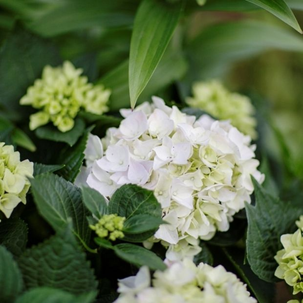 Kwiaty w wazonie -  jak o nie dbać, aby stały dłużej?