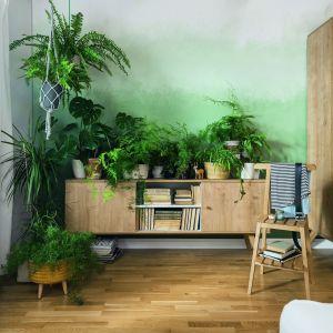 Domowy ekosystem. Fot. VOX