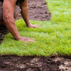 Trawa, wbrew powszechnemu mniemaniu, do prawidłowego wzrostu potrzebuje sporych ilości wody. Dlatego trawnik powinno się nawadniać regularnie. Fot. Shutterstock