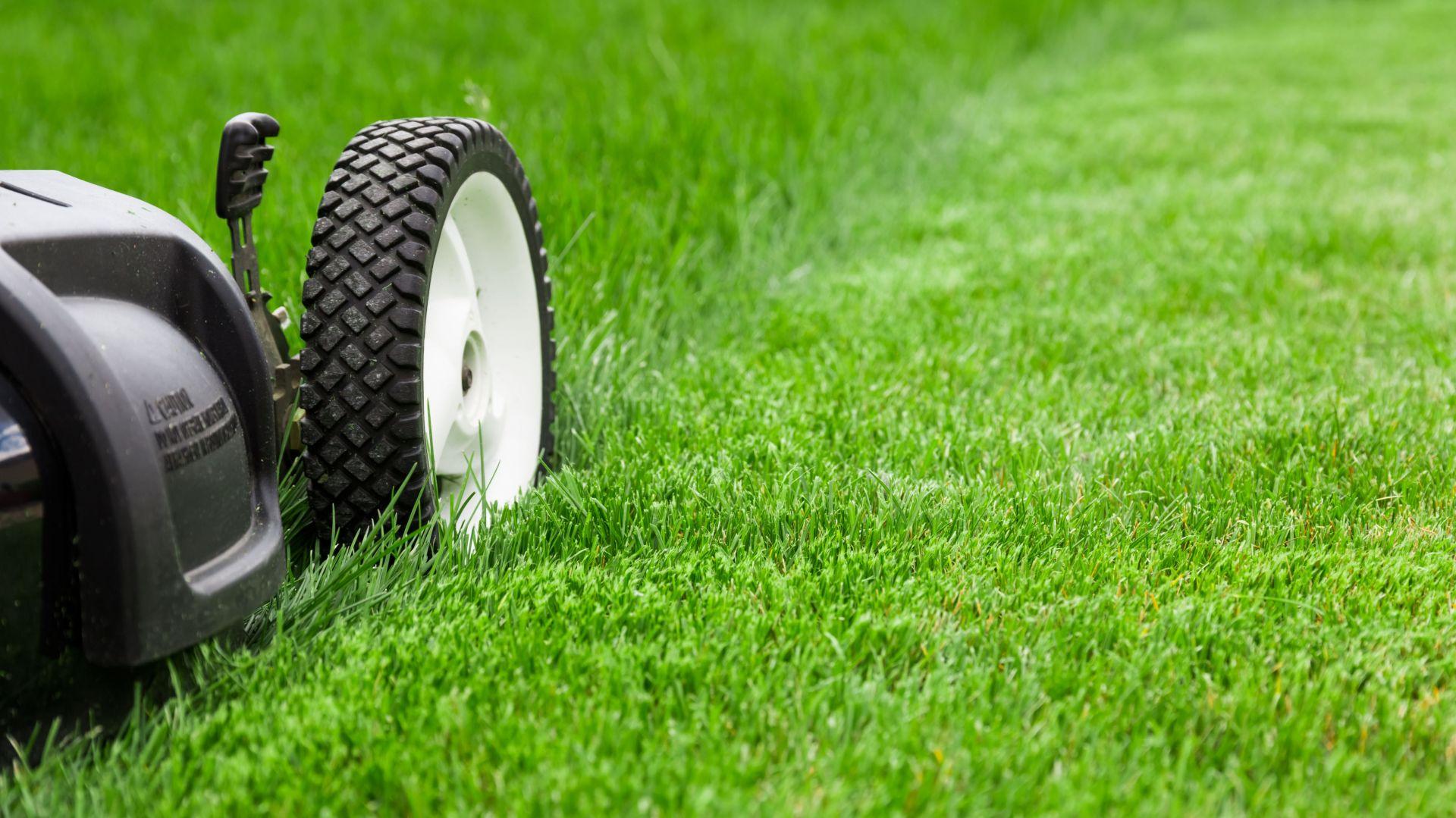 Ogród w symbiozie z naturą – jak dbać o trawnik, by nie naruszać ekosystemu gleby. Fot. Krysiak