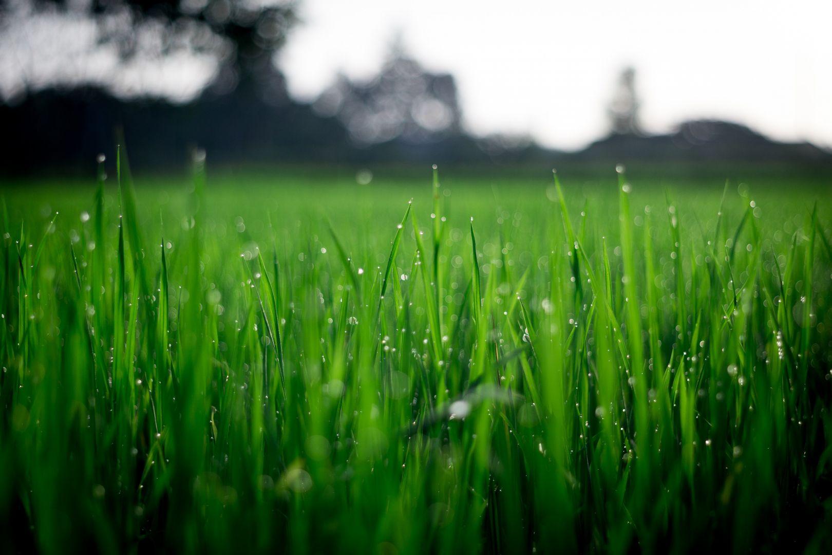 Ogród w symbiozie z naturą – jak dbać o trawnik, by nie naruszać ekosystemu gleby. Fot. Pexels