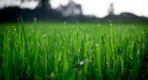 Zielony, puszysty i gęsty niczym dywan trawnik, jest celem każdego, kto posiada przydomowy ogródek. Zdradzamy sposoby na ekologiczną i skuteczną pielęgnację trawy.
