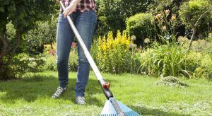 Zdrowa, bujna i zielona trawa to wizytówka każdego ogrodnika.