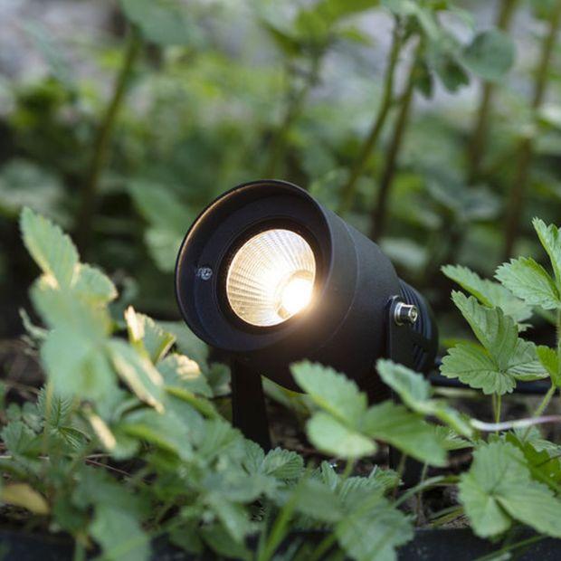Piękny ogród - jak wybrać oświetlenie
