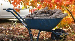 Pierwsze liście opadają już z drzew i, choć temperatura nie zapowiada jeszcze końca lata, to w powietrzu czuć nadchodzącą jesień. Co to oznacza dla właścicieli ogrodów? Czas porządków!