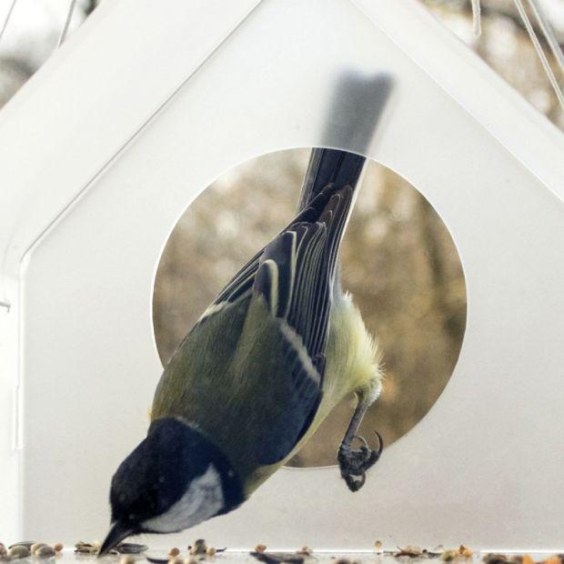 Karmnik od designera - zaproś ptaki do ogrodu