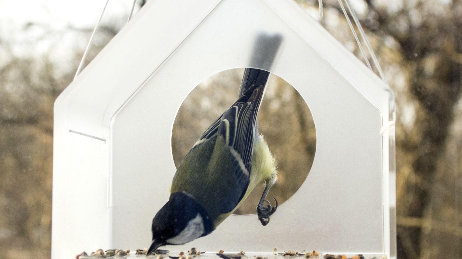 ciekawe-karmniki-dla-ptakow-zobacz-je-2.jpg