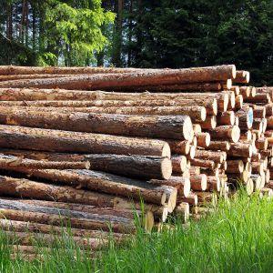 W zależności od stopnia wysuszenia drewna oraz jego gatunku stosujemy różne metody impregnacji. Zadbać musimy przede wszystkim o zabezpieczenie drewna przed ogniem, niekorzystnymi warunkami atmosferycznymi oraz czynnikami biologicznymi, czyli grzybami i insektami.Fot. Shutterstock