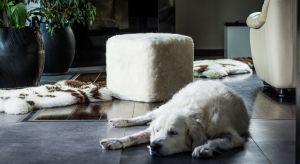 Co zrobić, gdy minimalizm zaczyna nam przeszkadzać? Jak wypełnić wnętrze, które wydaje się chłodne i bez charakteru? Zobacz inspirujące aranżacje przedstawiające futerkowe meble wypoczynkowe: fotele, sakwy i pufy.