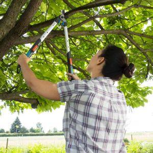 Przycinanie drzew i krzewów. Fot. Gardena
